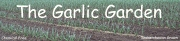 The Garlic Garden, Yorkton